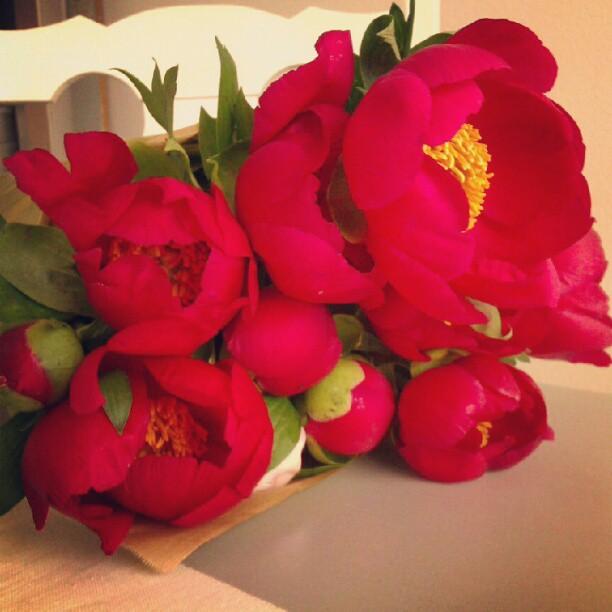 Peonies, peonie, red, flowers, floral, scarlett flowers, scarlett, magenta, japanese peonies, peonie giapponesi