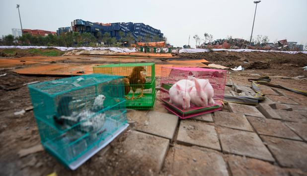 Tianjin: Animals for chemicals Test Objects