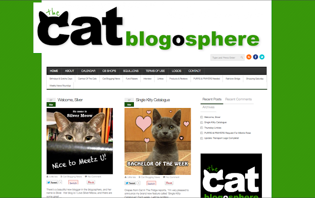 Cat blog rules
