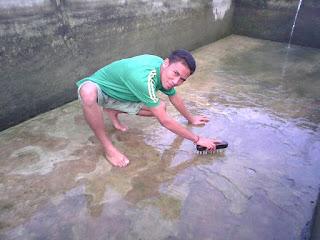 Cara membersihkan kolam pembesaran ikan nila
