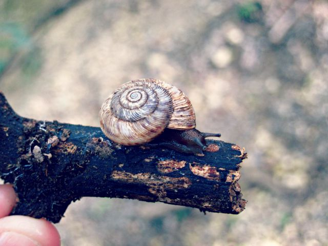Small snail on a branch