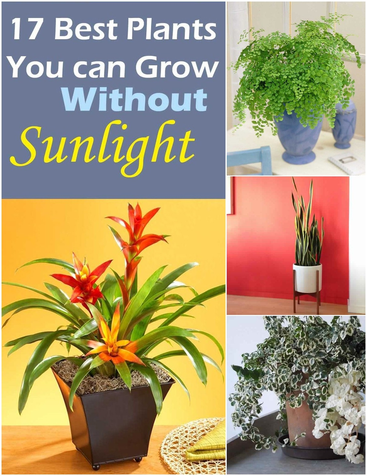 Plants that Grow without Sunlight | 17 Best Plants to Grow Indoors ...
