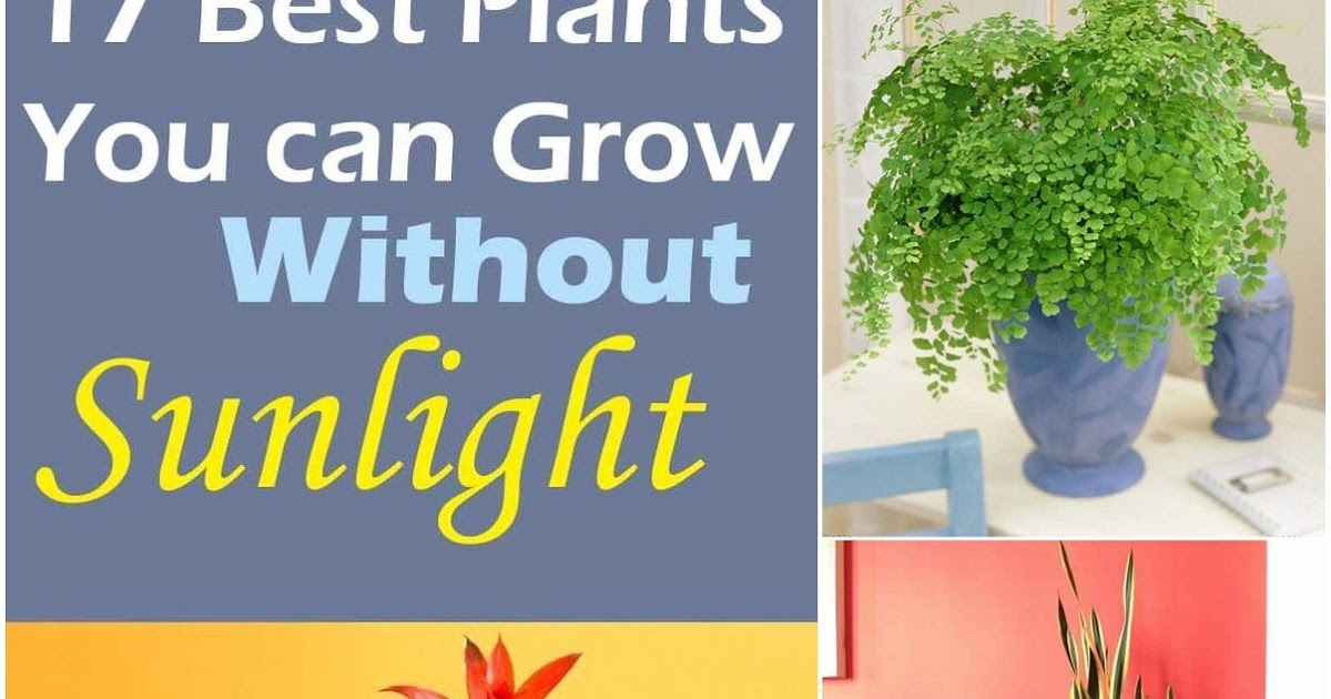 a biology research project on the survival of plants without sunlight Without light a plant cannot grow, reproduce, or photosynthesize plants utilize the different colors found in visible light to control different aspects of their growth.