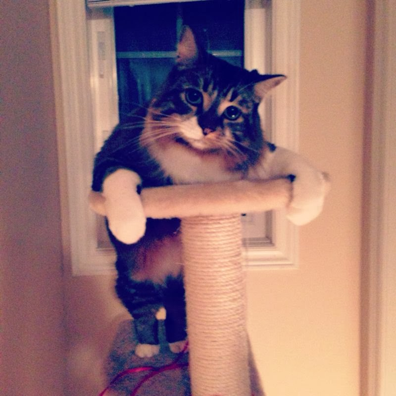 Funny cats - part 86 (40 pics + 10 gifs), cat poses on cat tree