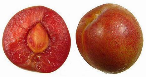 Fruta híbrida - Ciruela/Albaricoque