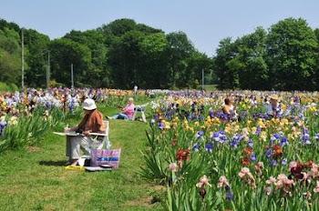 les peintres se ruent au jardin de Bubry à la floraison