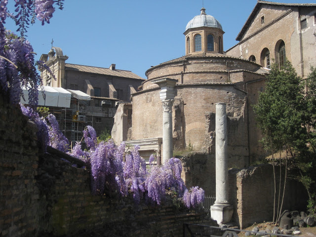 Wisteria in the Roman Forum