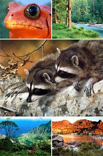 Бесплатные картинки пейзажей животных на рабочий стол