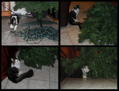 Anakin Cat with Two Legs & his Christmas Tree