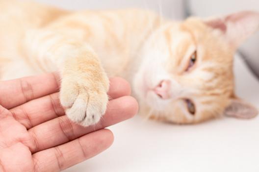 Kocie akuszerki