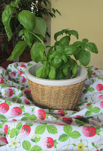 ONE SMALL BASIL PLANT
