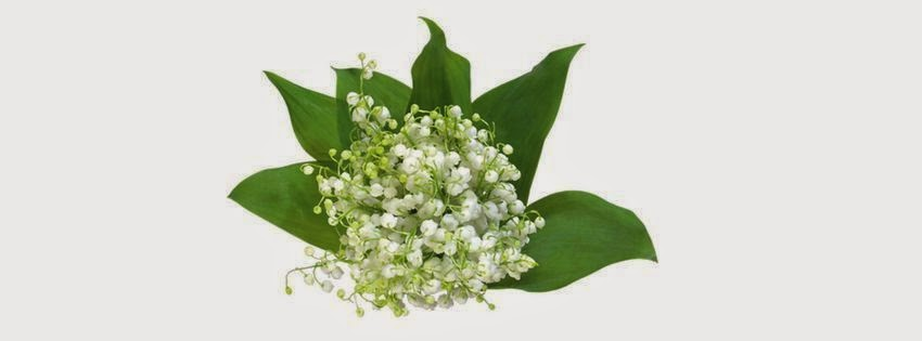 Une belle couverture facebook muguet