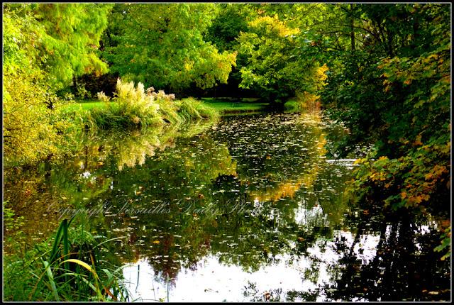 Parc du Cénacle automne Versailles