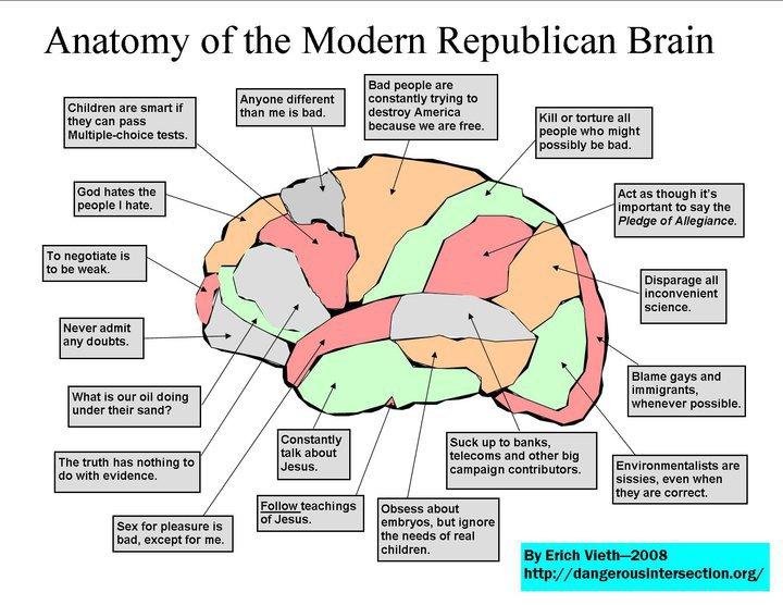 Survivor: Brain Anatomy