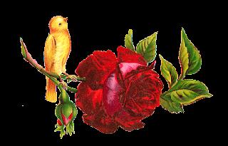red rose clip art yellow bird