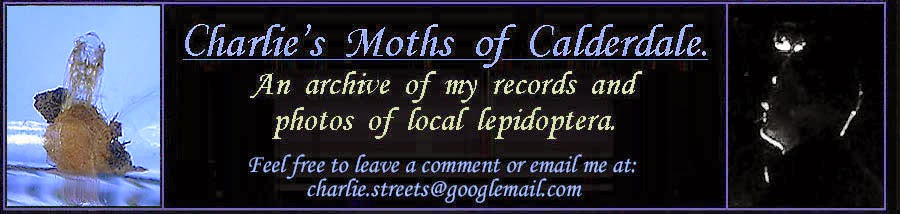 Charlie's moths of Calderdale.