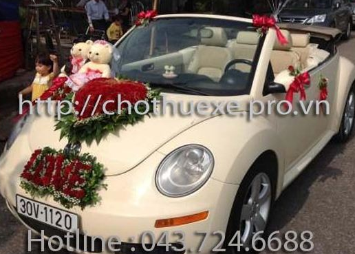 Cho thuê xe Volkwagan Beetle