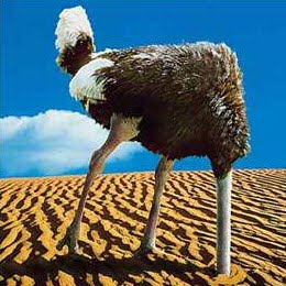 i begin my sermon today by asking a question true or false ostriches bury their heads in the sand when theyre scared or threatened
