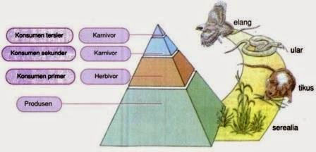 Pengertian Piramida Makanan