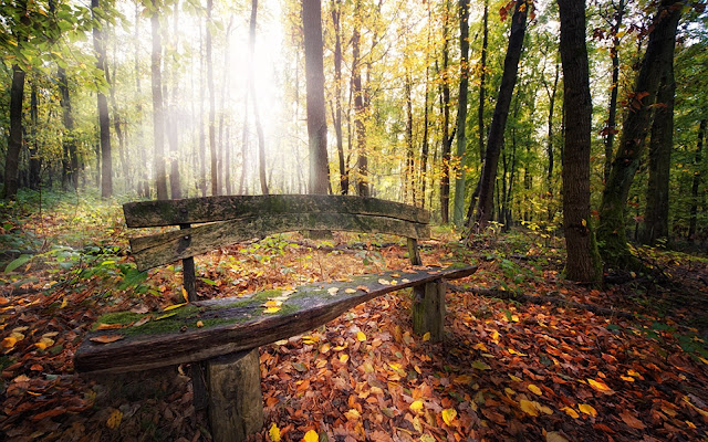 Autumn Forest and Bench