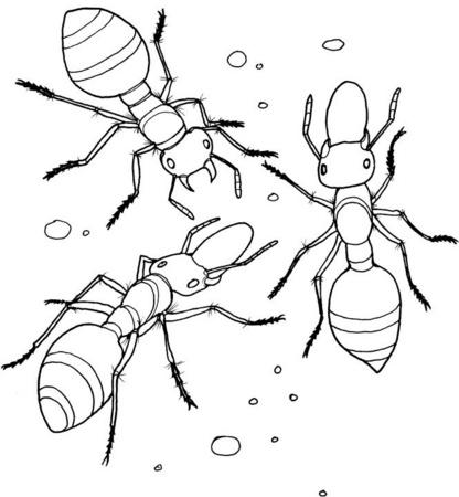 Excelente Las Hormigas Van A Marchar Colorear Regalo - Páginas Para ...