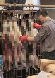 """Να τους χαίρονται οι """"αντιφασίστες""""...Πολυπολιτισμικό σοκ στο κέντρο της Αθήνας: Έστησαν παζάρι και πουλούσαν σκοτωμένα σκυλιά οι λαθρομεταναστες"""