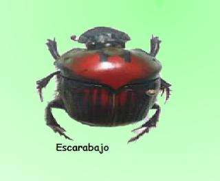 http://www.juntadeandalucia.es/averroes/recursos_informaticos/proyectos2004/la_tierra/invertebrados/indexinvertebrados.html