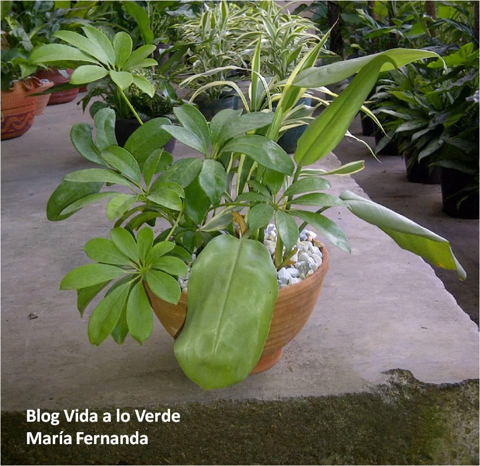 Plantas sombra cheap plantas de sombra with plantas for Lista de plantas de sombra