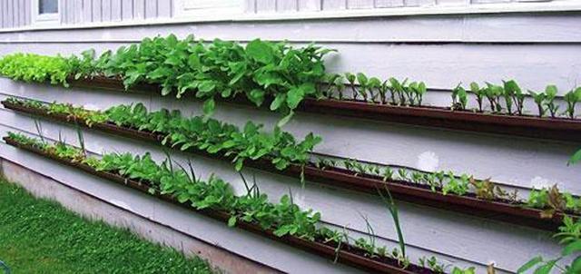 Aproveitando a parede para fazer um jardim vertical