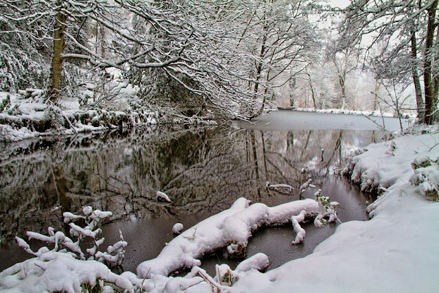 Snow Covered Log in the Pond