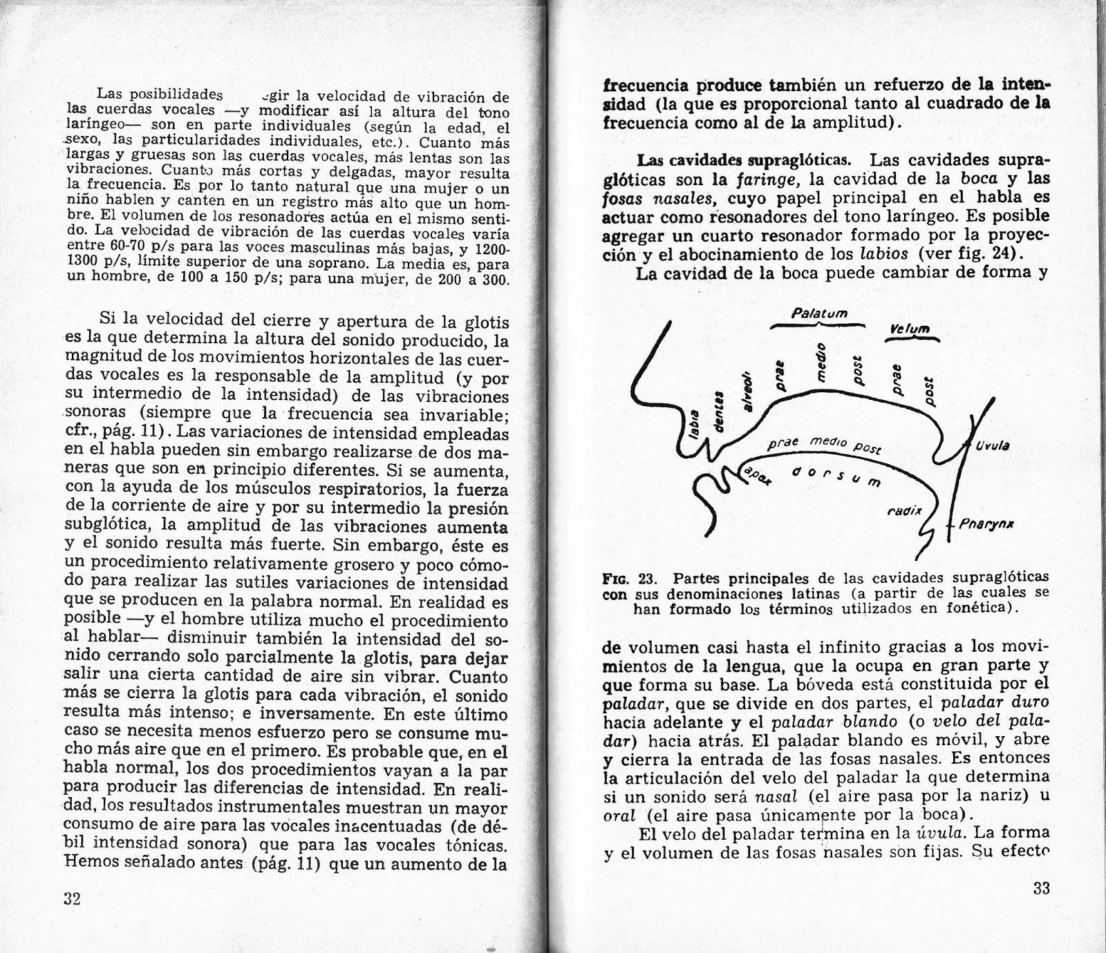 Expresión Corpovocal FEDA: SOBRE ANATOMIA Y FISIOLOGIA DEL APARATO ...
