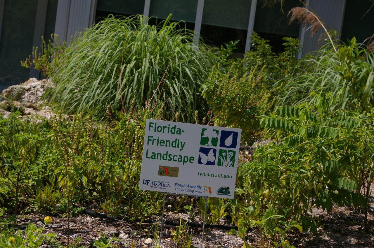 Among other things, we've had great luck providing habitat for native  species. Plants like milkweed and passionflower vines provide food for both  ... - Tin Box: Florida Friendly Landscape