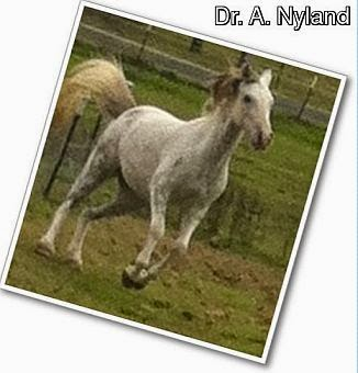 Dr A. Nyland