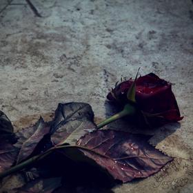 essays on a rose for emily a rose for emily essay critical essays enotes com