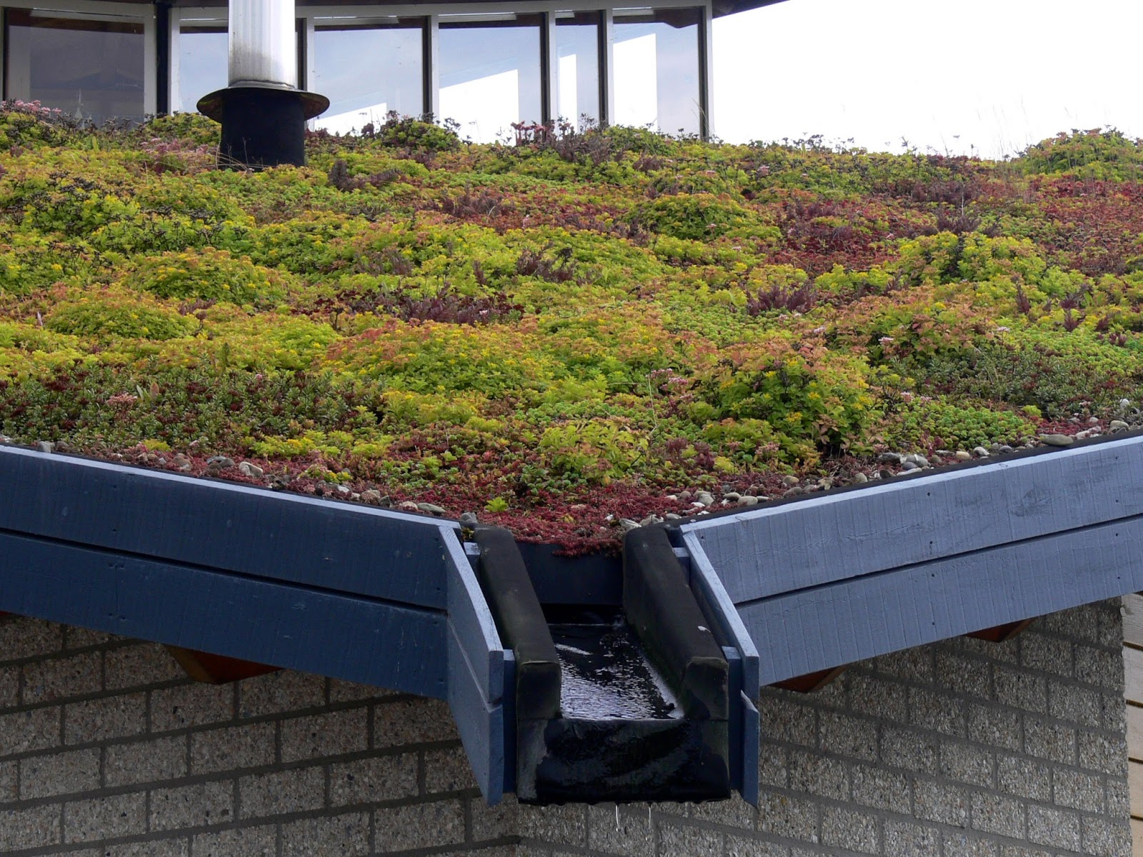 boston green blog guest post the benefits of living roofs for cities. Black Bedroom Furniture Sets. Home Design Ideas