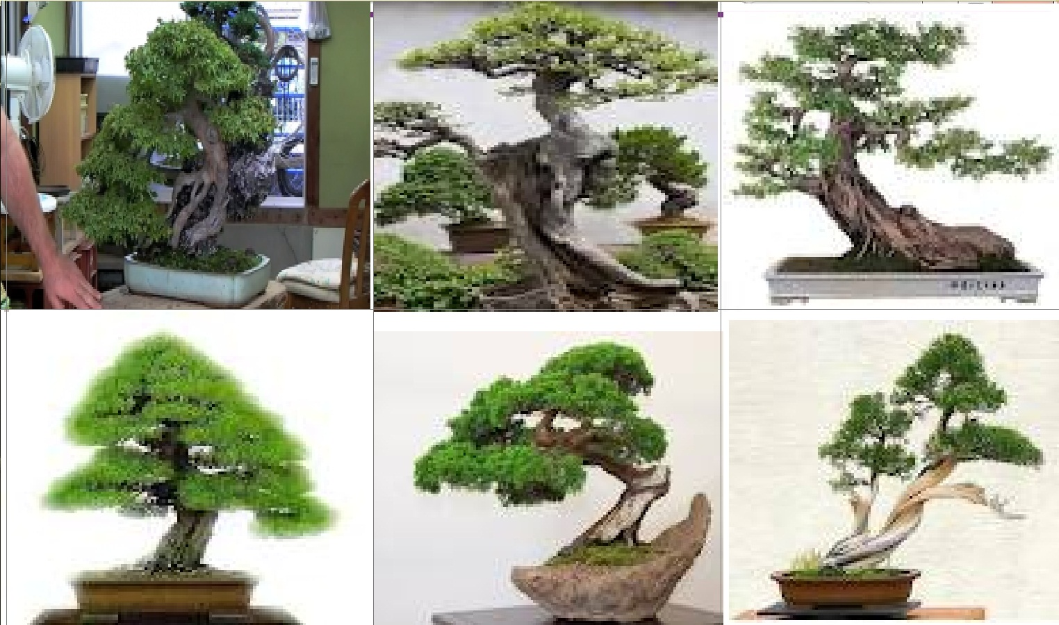 Beautiful Wallpapers Bonsai Styling Video Panduan Tehnik