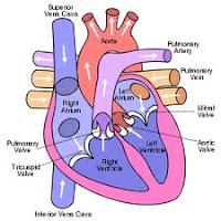 Agar Jantung Selalu Sehat