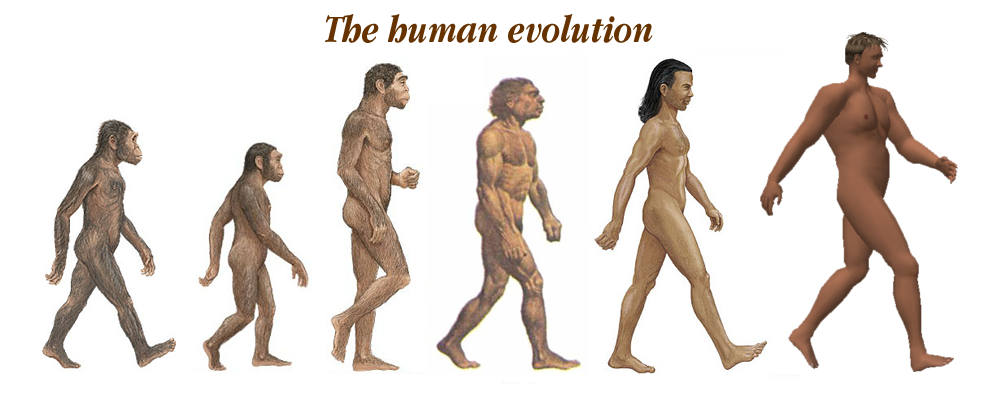 modern human evolution essay
