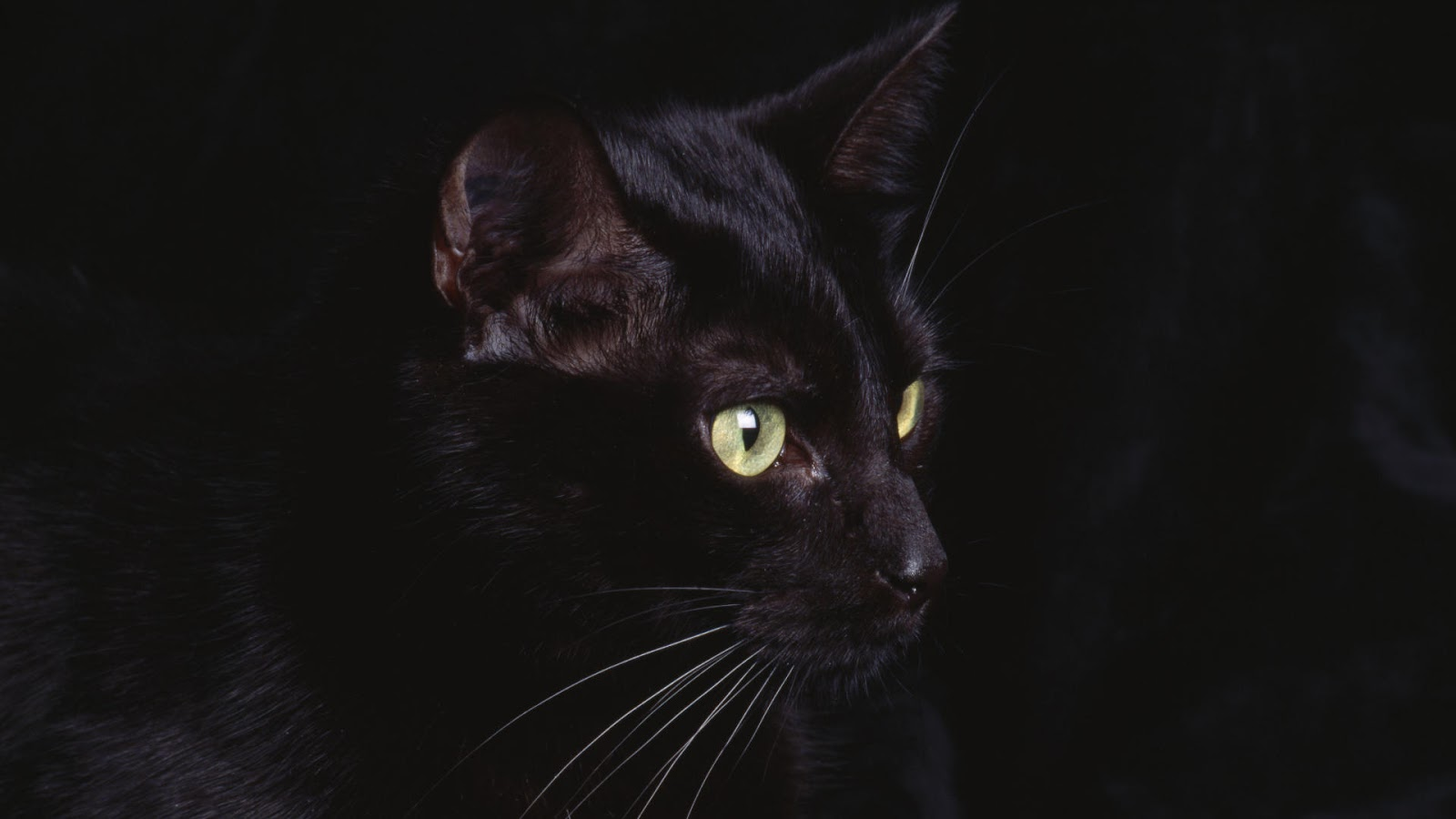 Black Cat 3d Wallpaper Bnb Coin How Does It Work Up