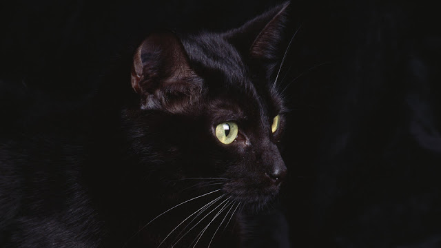 Cute Black Cat Wallpaper