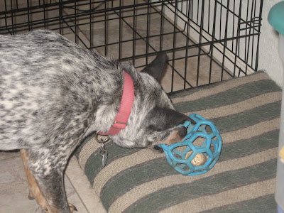 Can Pigs Ear Chews Upset Dogs Stomach