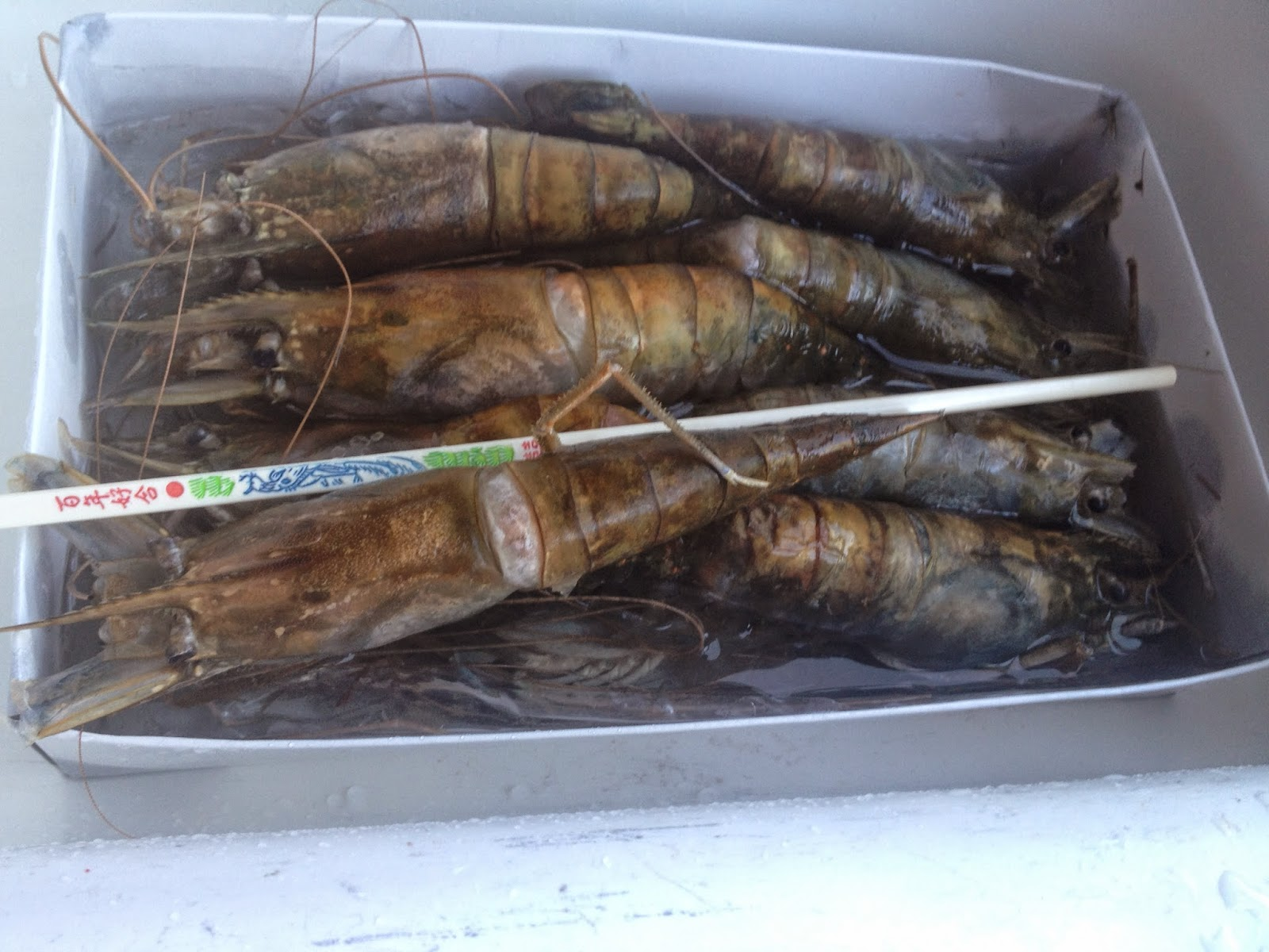 large raw shrimps in a box chopstick comparison