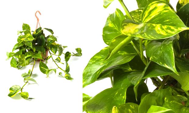 A cura plantas de interiores e seus efeitos terap uticos - Ver plantas de interior ...
