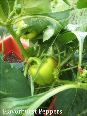 Flavorburst Peppers