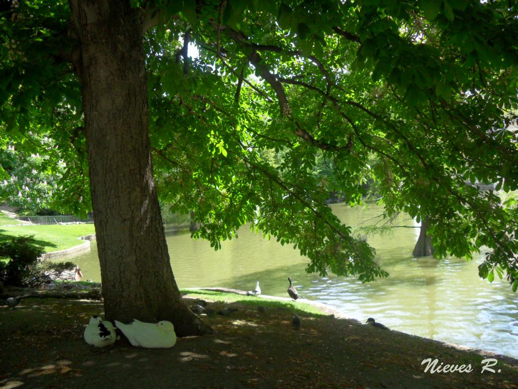 Snapping life a la sombra de un rbol en primavera for Arboles de jardin para sombra