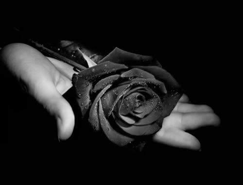 Rosas Negras Facebook