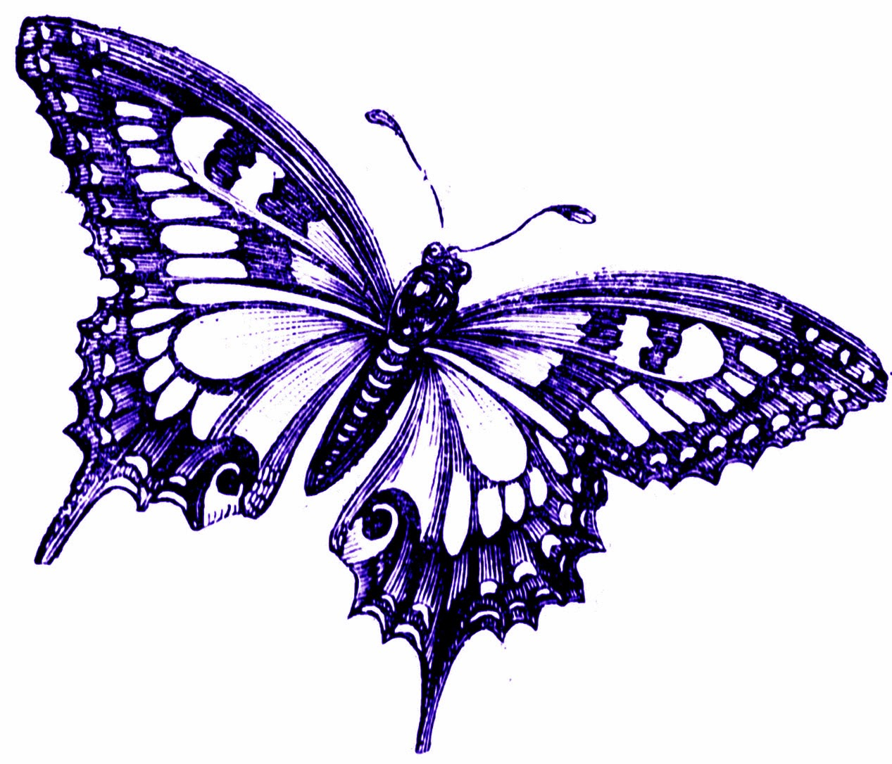 free vintage butterfly clipart - photo #10