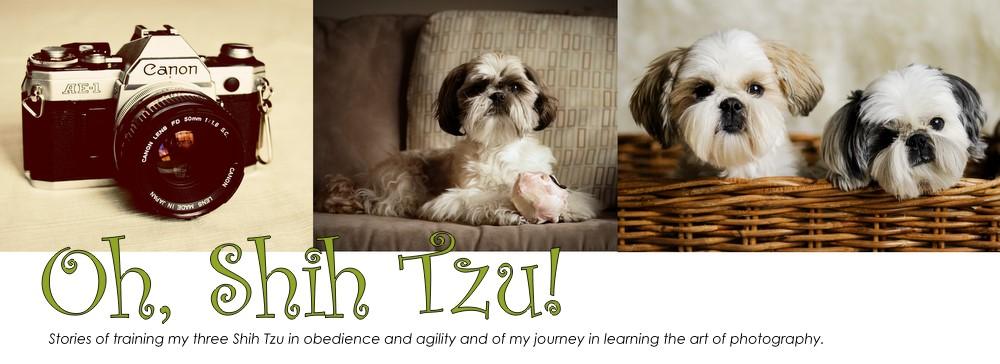 Oh, Shih Tzu!