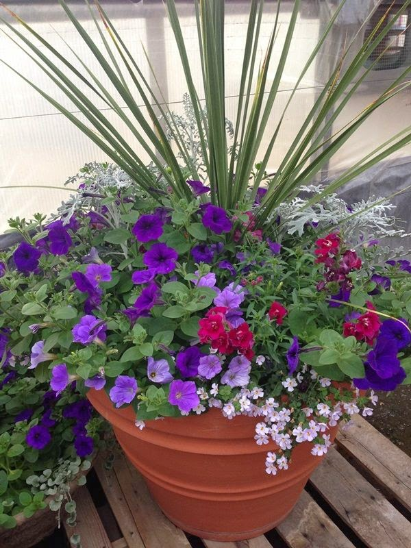 Beautiful plants dreaming gardens - Potted gardentricks beautiful flowers ...