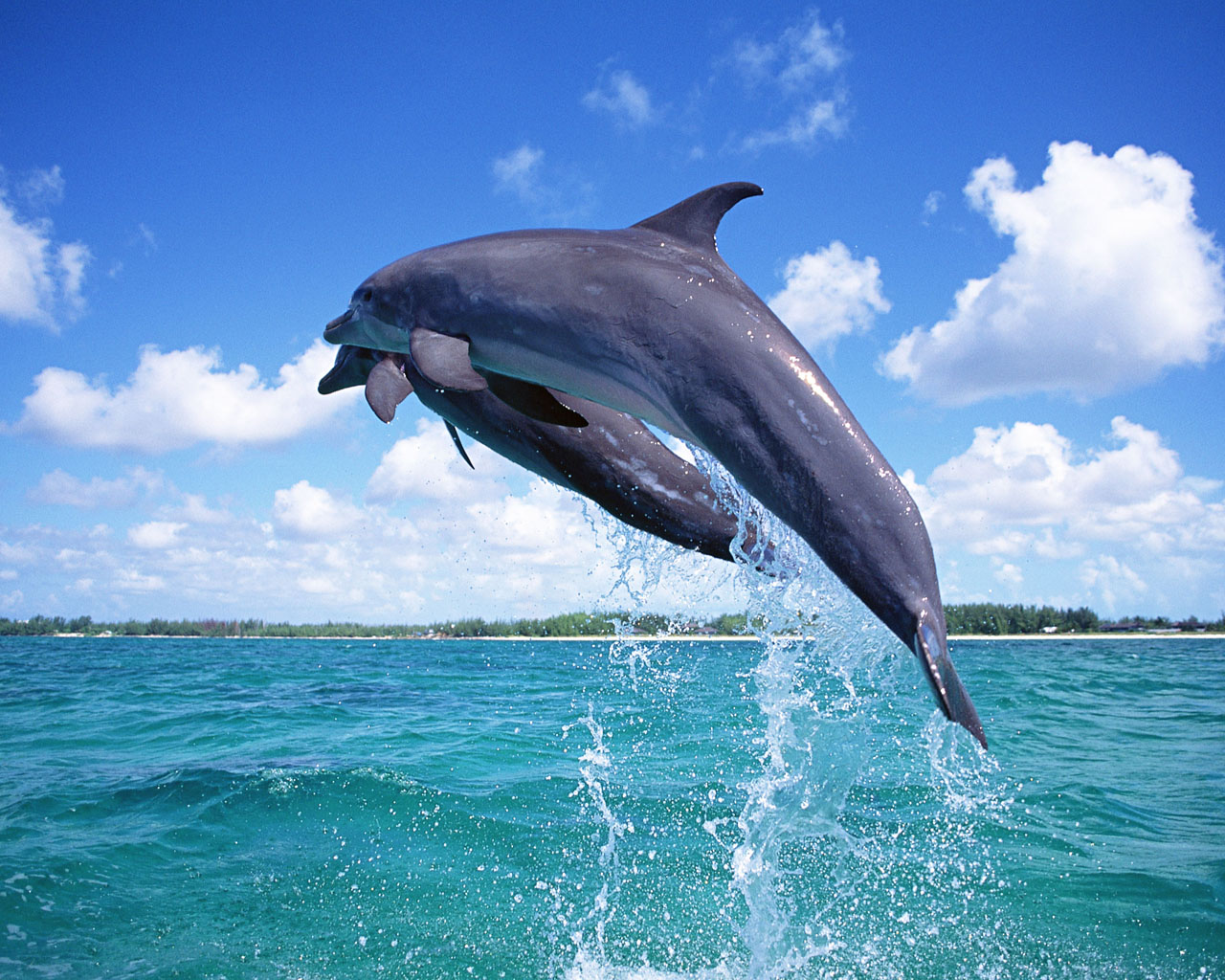 dolphin wallpaper amazing wallpapers